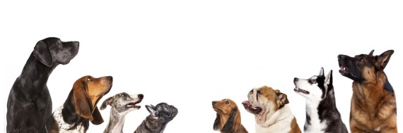 dogs looking up - smaller PPT